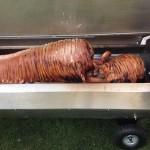 Hog Roasted Pig