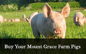 mount-grace-farm-pigs-84745-1